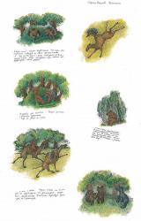 С.Козлов, «Диалоги», наброски  Бум., тушь., перо, акв., 36х24, 1978